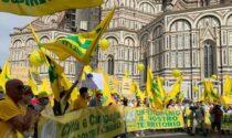 Invasione dei cinghiali, la testimonianza dell'agricoltore pistoiese a Firenze