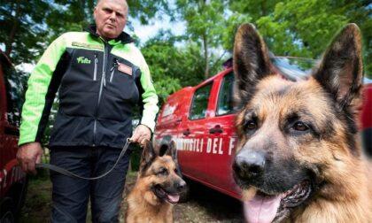 È scomparso Golia, il cane intervenuto durante il terremoto di Amatrice